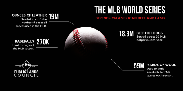 Beef Lamb Baseball infographic.png